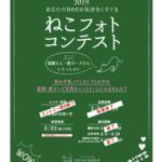 ねこフォトコンテスト2019